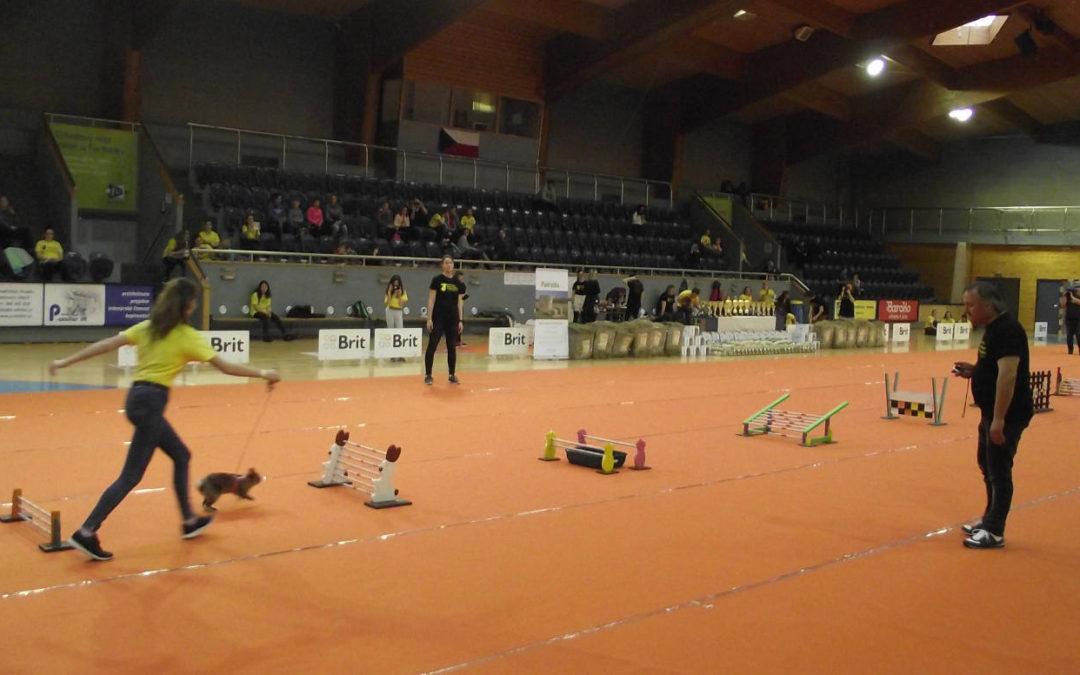 Mistrovství republiky v králičím hopu