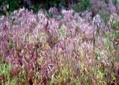 Travina, z níž se suší seno