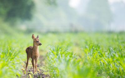 Ochrana zvířat během senoseče je pro nás důležitá