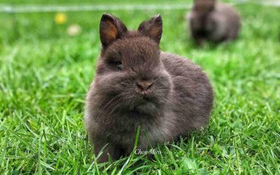 Jak správně krmit králíčky